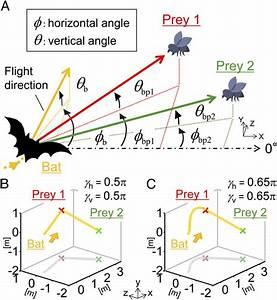 Model Of Bat U0026 39 S Flight Dynamics   A  Schematic Diagram To