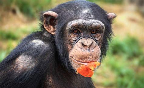 facial recognition  combat wildlife trafficking