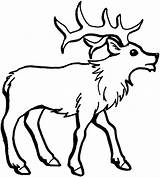 Elk Coloring Pages Draw sketch template