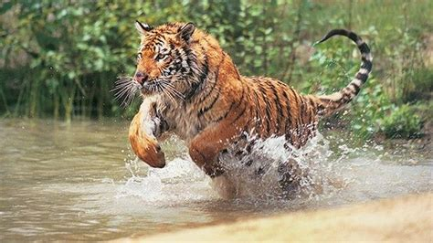 Animals Gone Wild  Nat Geo Wild
