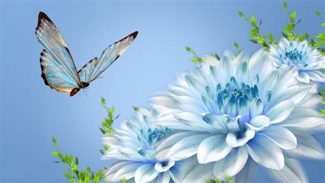 animated pictures  blue flowers  butterfly  hd