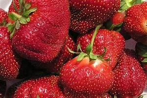 Plant De Fraise : cabot fraisier plant de fraises ~ Premium-room.com Idées de Décoration