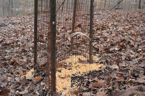Deer Antler Shed Trap by Shed Antler Traps Camouflage Clothing Uk