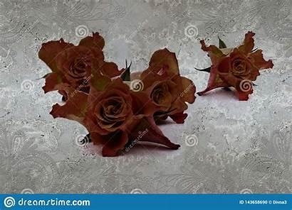 Fresco Effect Lace Concrete Roses Textured