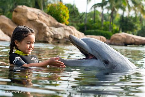 Discovery Cove Orlando Tickets by Discovery Cove Orlando Theme Park Attraction In Orlando