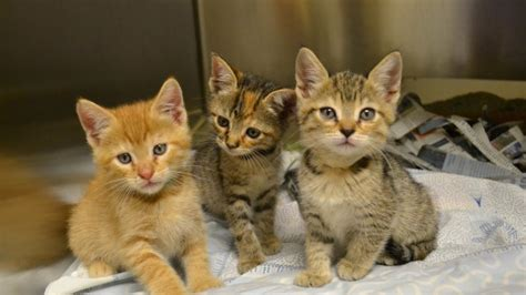 Humane Society In Desperate Need Of Foster Homes For