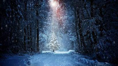 Forest Snow Winter Wallpapers Nature 4k Desktop