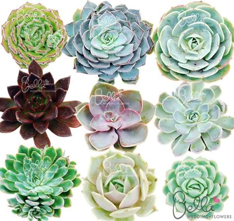 types of succulents freshly cut succulent flowers have attractively colored fleshy petals our mixed package