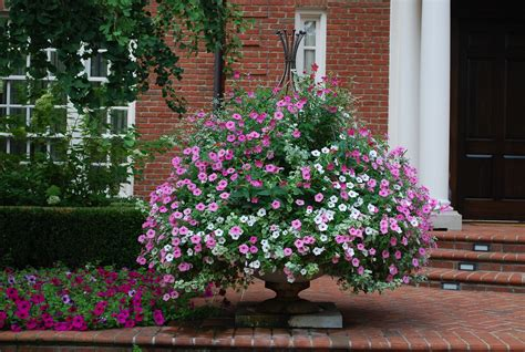 best summer flowers to plant container gardening 101 big results in small spaces garden variety