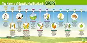 Beyond The Label  3 Truths  U0026 No Lies About Gmos  U2013 Gmo Answers  U2013 Medium