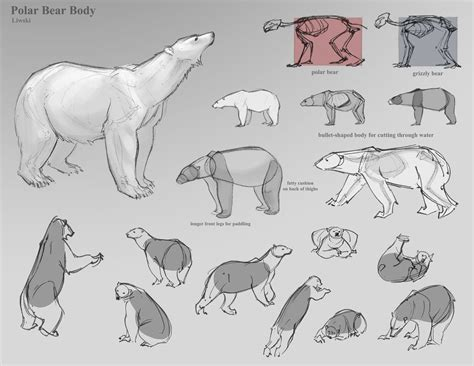 art references drawing bears tips  tricks