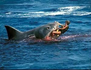 Shark attacks often photoshopped, make sharks look like ...