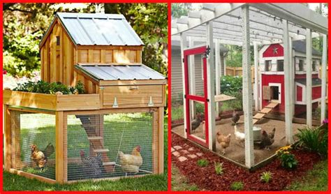 Chicken House Designs by 100 S Of Free Chicken Coop Plans