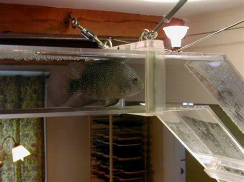 aquariums en r 233 seau pour nos poissons d agr 233 ment animogen