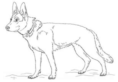 hund schaeferhund zeichnen lernen schritt fuer schritt
