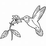 Bird Coloring Paradise Pages Getcolorings sketch template