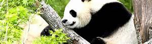 Billet Zoo De Beauval Leclerc : zooparc de beauval guide du zoo promos horaires tarifs m t o b b panda etc ~ Medecine-chirurgie-esthetiques.com Avis de Voitures