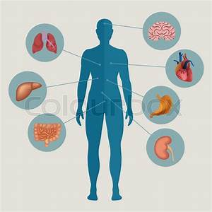 Human Body With Internal Organs  Medical Infographics