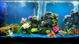 Fish Tank Bubbler Decoration by 55 Gallon Freshwater Community Aquarium 30 Fish Youtube