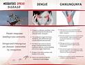 Symptoms, Diagnosis and Treatment of Chikungunya Virus & Dengu