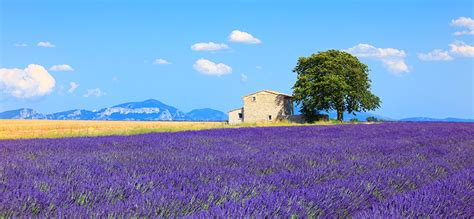 chambres d hotes cote d azur provenza guida su provenza e costa azzurra