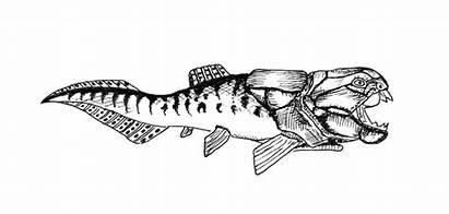 Fish Prehistoric Placoderms Dunkleosteus Coloring Dinosaur Teeth