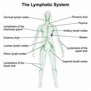 Self-Healing: The Lymphatic System | Therapies for ...  Lymph