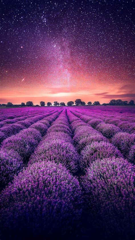 Fields Of Lavender Wallpapers - Wallpaper Cave