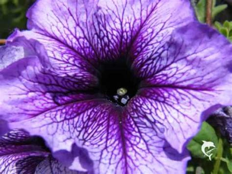 foto fiori bellissimi fiori bellissimi