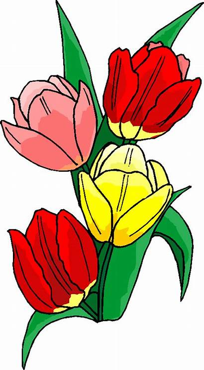 Flowers Clipart Flower Microsoft Spring Cliparts Clip