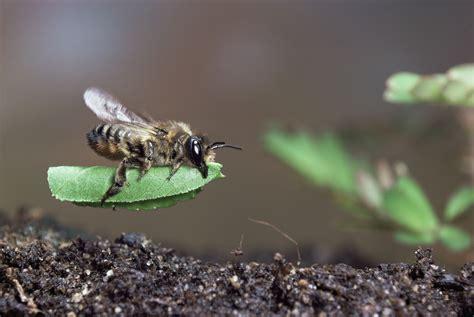 Der Bienenfreundliche Garten by Bienenfreundliche Pflanzen F 252 R Garten Und Balkon