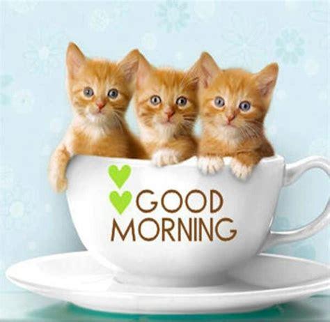 good morning cute animals kitten wallpaper cute