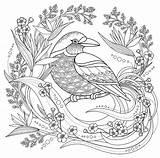 Coloring Bird Birds Pages Adults Children Elements Floral Printable Simple Cute Adult Print Colouring Justcolor Animals Nature Library Collection sketch template