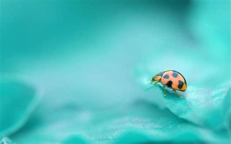 Cute Ladybug Wallpaper 3942 1920 X 1200 Wallpaperlayercom