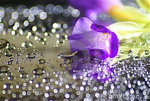 Water Drops, Bokeh And Purple Flower Stock Photo - Image ...