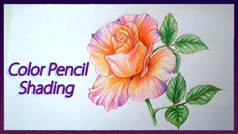 Realistic Color Pencil Shading Tutorial Of Rose Flowers