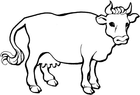 cow colors farm animal cattle cow coloring sheet