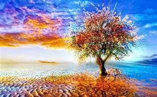 colorful tree images wallpaperexperts loversiq