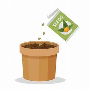 Growing Seed Stock Illustrations  U2013 7 984 Growing Seed