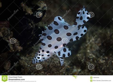 juvenile grouper barramundi indonesia ecosystem