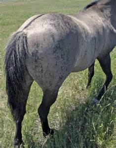 Rare Horse Colors and Markings
