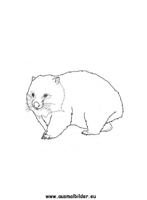 ausmalbilder wombat wombat malvorlagen