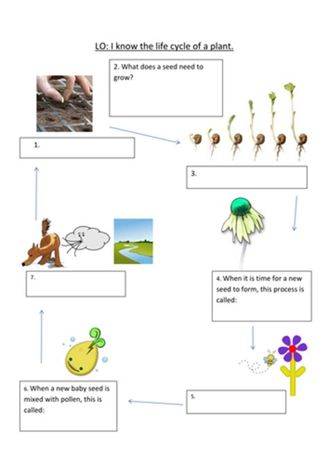 cycle of a plant powerpoint by elisewilkinson