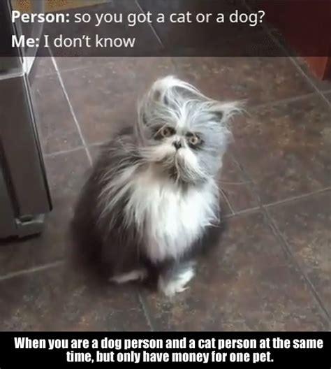 breed  cat        loldamncom