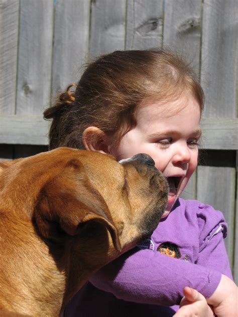 dog licks girl stock photo freeimagescom