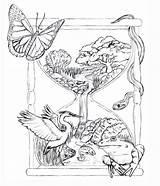 Drawing Wicca Drawings Sketches Getdrawings sketch template