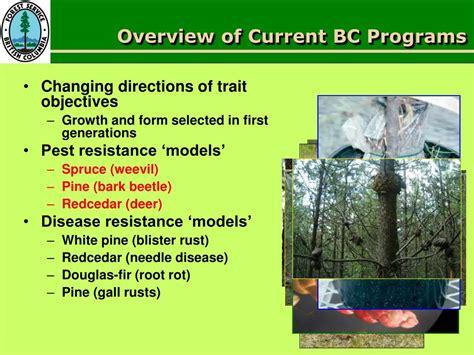 alvin yanchuk ppt powerpoint presentation spruce