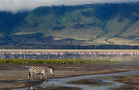 Ngorongoro Crater Conservation Area —evans Adventure Safaris