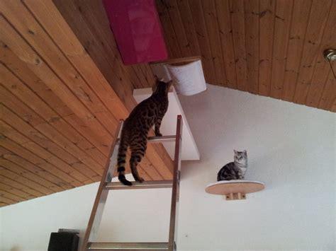 catwalk katzen ikea catwalk katzen selber bauen stunning catwalk unser bengal kater auf seiner katzen kletterwand