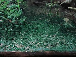 Can you use erythromycin as treatment for blue-green algae ...